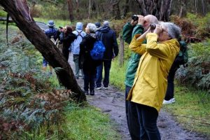 Bushwalking / bird watching